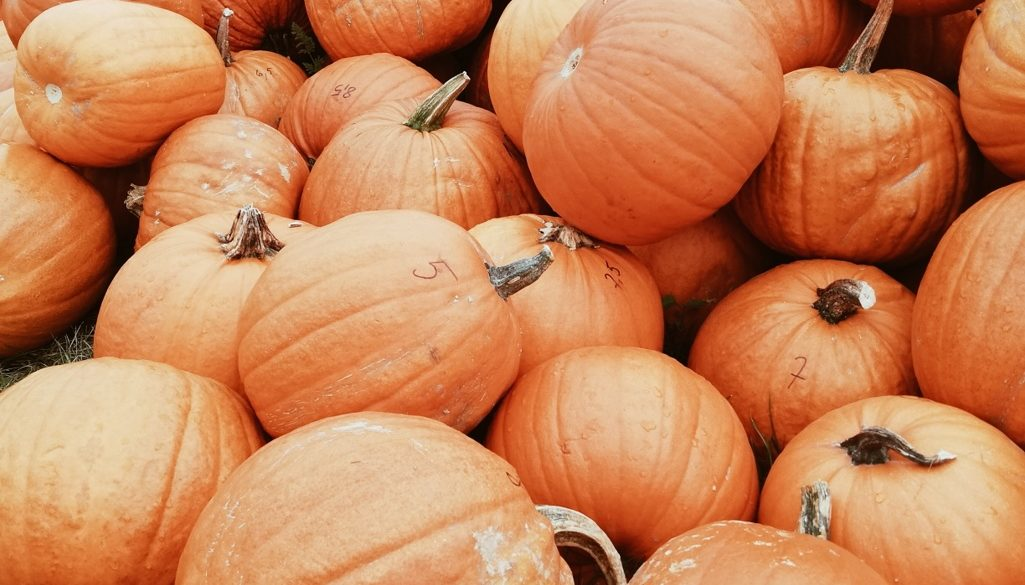 Jak nastawić się na Halloween? Miejsca, które musisz odwiedzić przed 31 października!